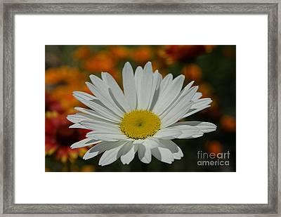 Daisy Framed Print by Nur Roy