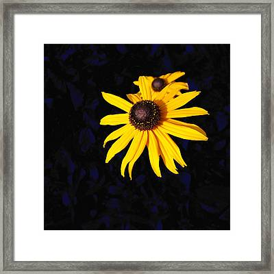 Daisy On Dark Blue Framed Print