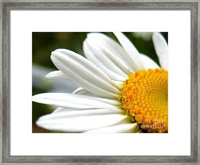 Daisy Framed Print by Patti Whitten