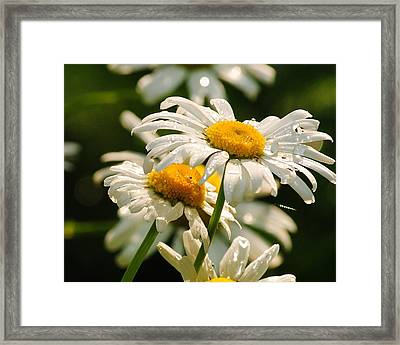 Daisy Framed Print by Paul Noble