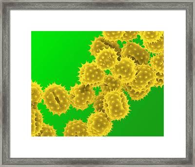Daisy Pollen Framed Print