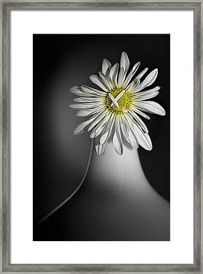 Daisy Pom Framed Print