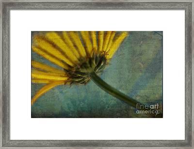 Daisy Reach Framed Print