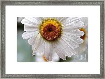 Daisy Reflect Framed Print
