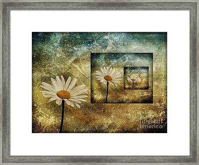 Framed Print featuring the photograph Daisy Shadows by Shirley Mangini