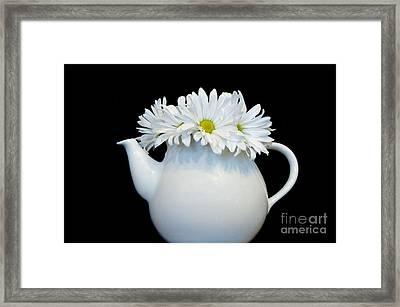 Daisy Tea Framed Print by Marsha Heiken