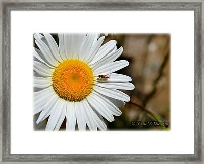 Daisy Framed Print by Terri K Designs