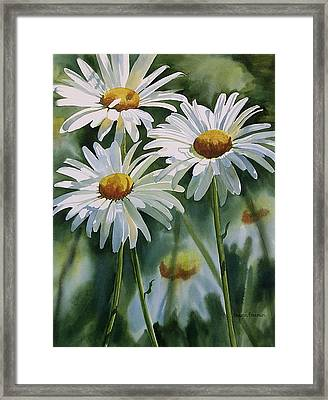Daisy Trio Framed Print by Sharon Freeman