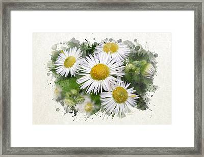 Daisy Watercolor Art Framed Print