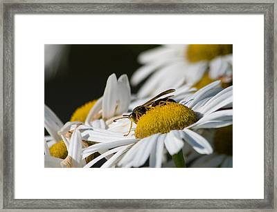 Framed Print featuring the photograph Daisy With Friend by Greg Graham