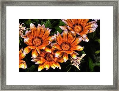 Daisy Wonder Framed Print
