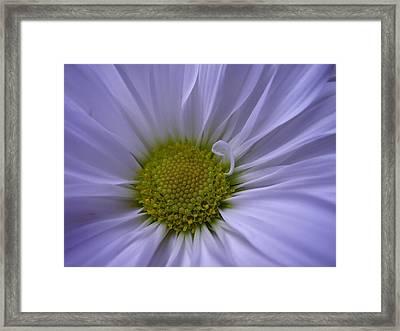Daisy Framed Print by Yvette Pichette