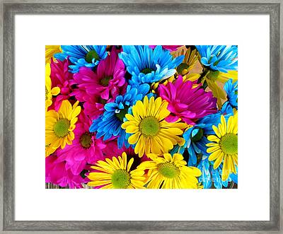 Framed Print featuring the photograph Daisys Flowers Bloom Colorful Petals Nature by Paul Fearn