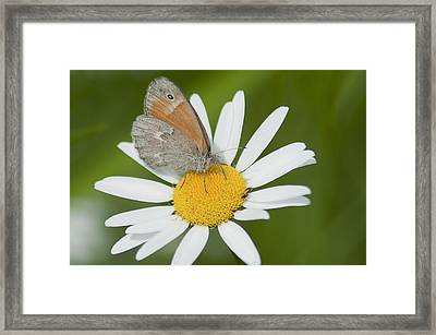 Daisy's Visitor Framed Print