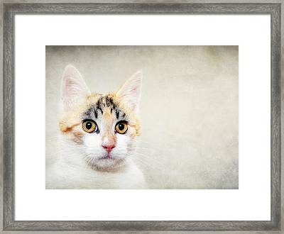 Dakota Framed Print by Pat Abbott