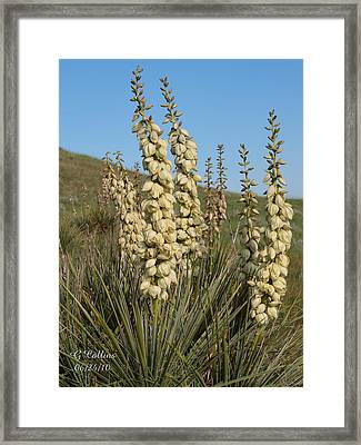Dakota Prairie Framed Print