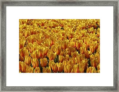 Framed Print featuring the photograph Dallas Blooms by John Babis