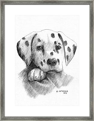 Dalmatian Puppy Framed Print