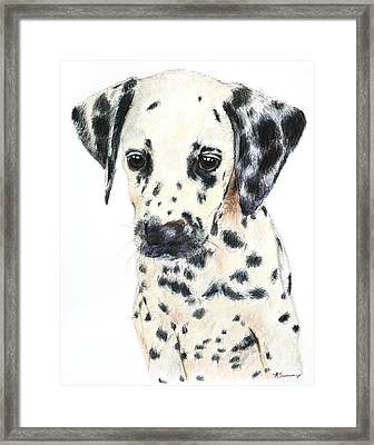 Dalmatian Puppy Painting Framed Print by Kate Sumners