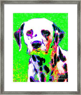 Dalmation Dog 20130125v3 Framed Print by Wingsdomain Art and Photography
