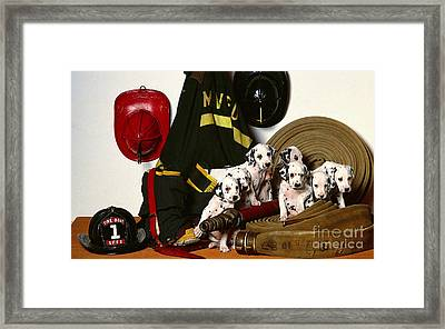 Dalmation Puppies  Framed Print
