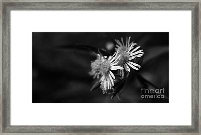Framed Print featuring the photograph Dames En Noir by Linda Shafer