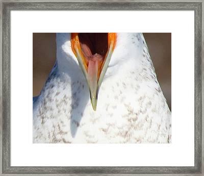 Damn Gull Moved Framed Print