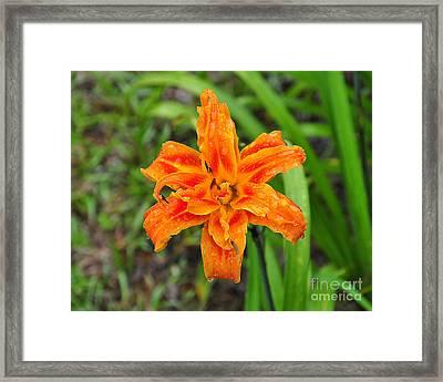 Damp Daylily Framed Print by Al Powell Photography USA