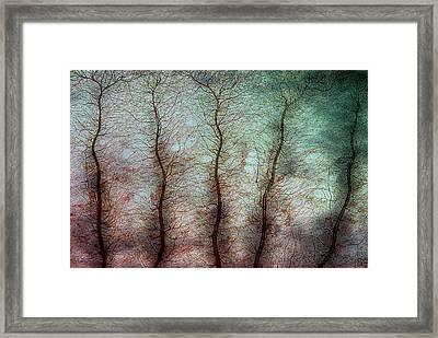 Damselfly Larva Gill Framed Print