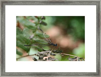 Framed Print featuring the photograph Damselfly by Neal Eslinger