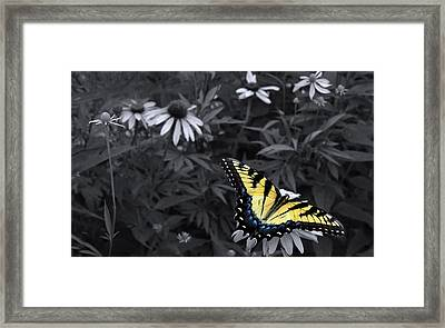Dance In The Garden Framed Print by Don Spenner