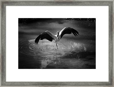Dance Like There Is No Tomorrow Framed Print