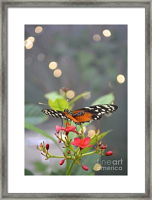 Dance Of The Butterfly Framed Print by Carla Carson