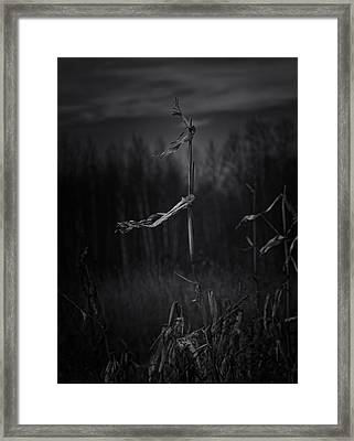 Dance Of The Corn Framed Print
