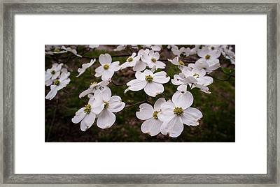 Framed Print featuring the photograph Dance Of The Dogwoods by Wayne Meyer