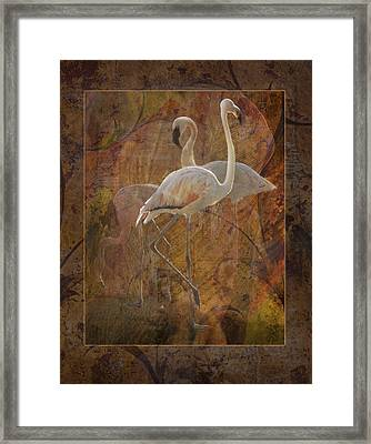 Dance Of The Flamingos Framed Print