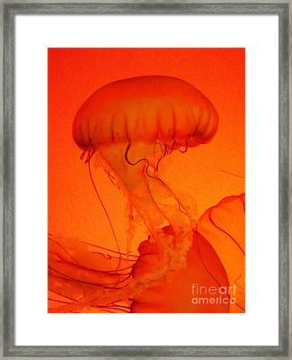 Framed Print featuring the photograph Dance Of The Jellies by Brigitte Emme