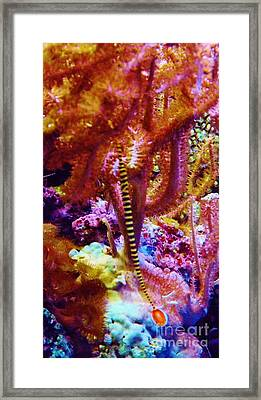 Framed Print featuring the photograph Dance Of The Pinfish by Brigitte Emme