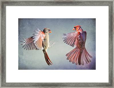 Dance Of The Redbirds Framed Print by Bonnie Barry