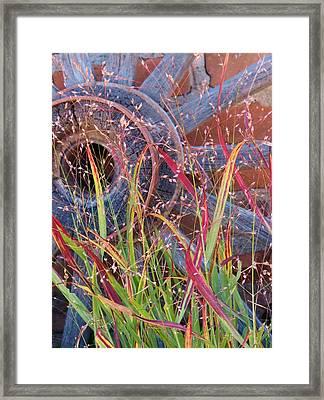 Dance Of The Wild Grass Framed Print by Feva  Fotos
