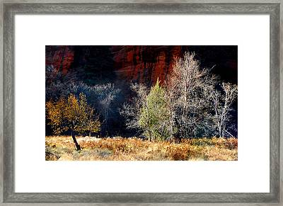Dance Of Trees Framed Print