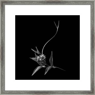 Dance With Me, She Said ... Framed Print