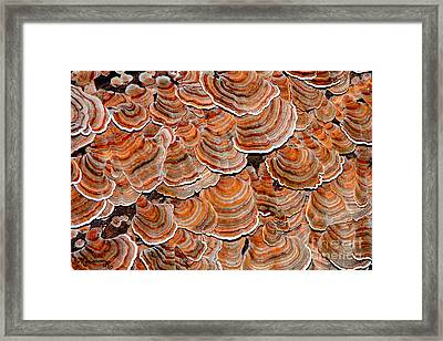 Dancers In Colorful Petticoats Framed Print
