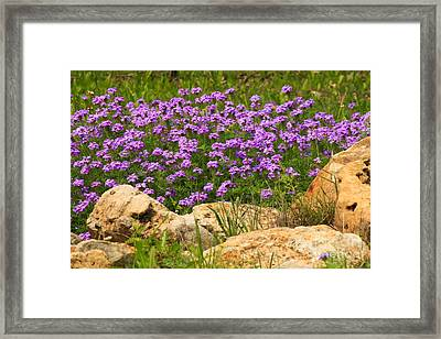 Dancing Among Rocks Framed Print