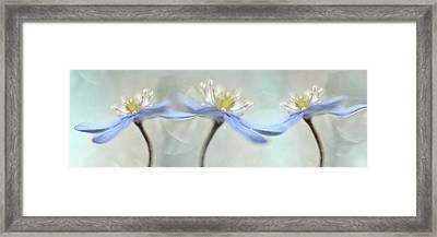 Dancing Anemones Framed Print