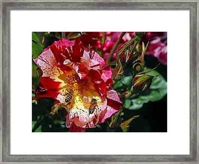 Dancing Bees And Wild Roses Framed Print by Absinthe Art By Michelle LeAnn Scott