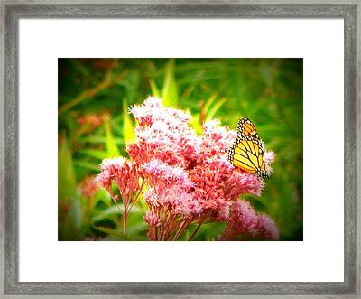 Dancing Butterfly Framed Print
