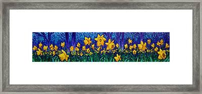 Dancing Daffodils  Framed Print by John  Nolan