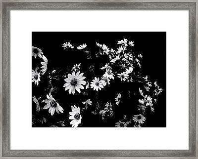 'dancing Daisies' Framed Print