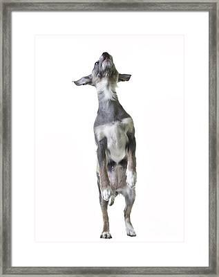 Dancing Dog Framed Print by Edward Fielding